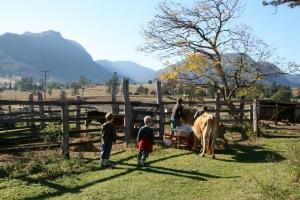 Farm duties at Cedar Glen