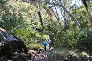 The cycad-lined track to Standley Chasm in the MacDonnell Ranges.