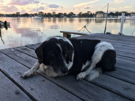 My writing buddy, Molly on the Noosa River