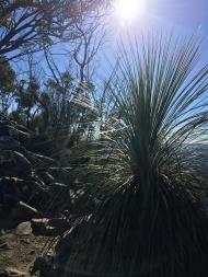 Summit of Mount Cooroora