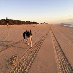 Early morning run on Noosa North Shore