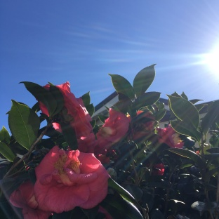 Winter sunshine, Brisbane, Queensland