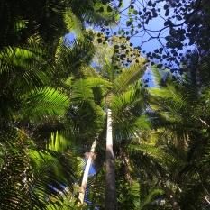 Rainforest path, Mt Warning, NSW
