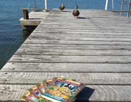 Ducks inspect the Hazard River series by JE Fison